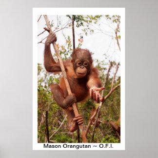 Albañil del orangután del bebé póster