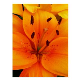 Albaricoque delicioso floral postal