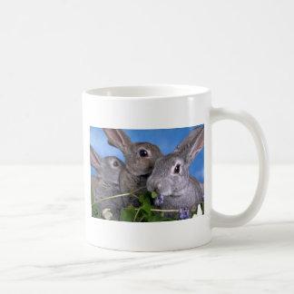 Albaricoque y conejo azul de Rex Taza