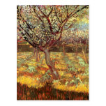 Albaricoqueros de Van Gogh en el flor, arte del Postal