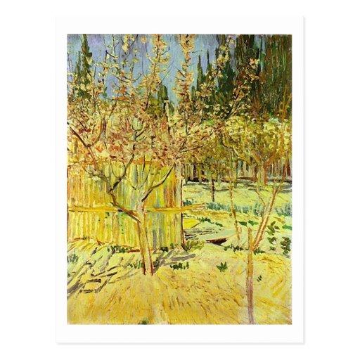 Albaricoqueros en el flor, Vincent van Gogh Postales