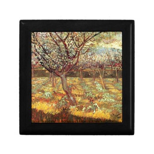 Albaricoqueros en flor de Van Gogh Caja De Regalo