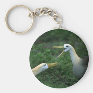 Albatros agitado en cortejo llavero personalizado