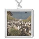 albatros Negro-cejudo, Thalassarche Colgante Cuadrado