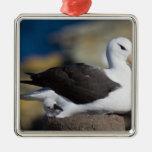 albatros Negro-cejudo Thalassarche Ornaments Para Arbol De Navidad