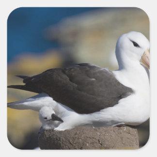 albatros Negro-cejudo Thalassarche Pegatina Cuadrada