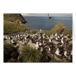albatros Negro-cejudo, Thalassarche Tarjeta De Felicitación