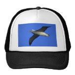 Albatros que vaga en vuelo gorras