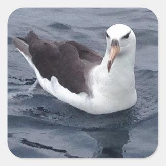 Albatros tímido pegatina cuadrada