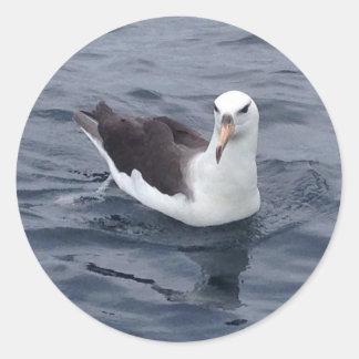 Albatros tímido pegatina redonda