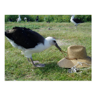 Albatross and Straw Hat Postcard