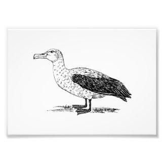 Albatross Bird Art Photograph