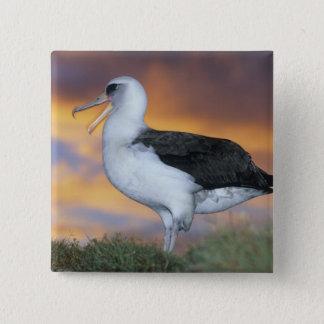 Albatross Laysan, (Diomedea immutabilis), USA, Pinback Button