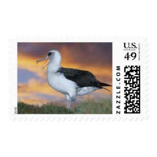 Albatross Laysan Diomedea immutabilis USA Postage Stamps