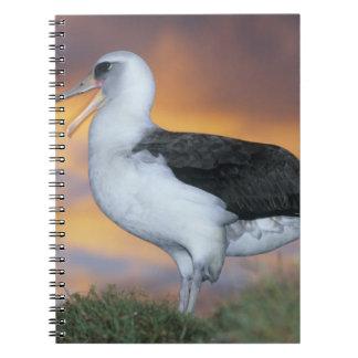 Albatross Laysan, (Diomedea immutabilis), USA, Spiral Notebook