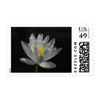 Albert de Lestang Postage Stamp