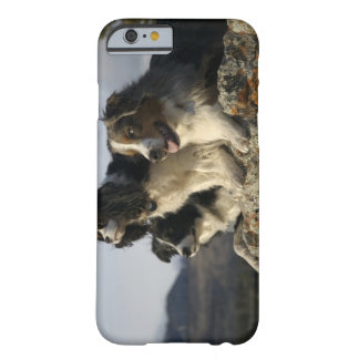 Alberta, Canada 2 Barely There iPhone 6 Case