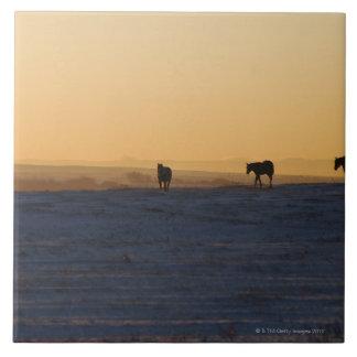 Alberta, Canadá 3 Azulejo Cuadrado Grande