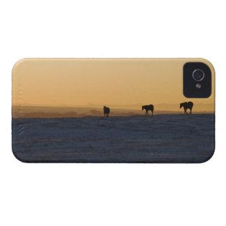 Alberta, Canadá 3 iPhone 4 Case-Mate Coberturas