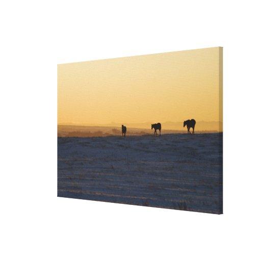 Alberta, Canadá 3 Impresión En Lona Estirada