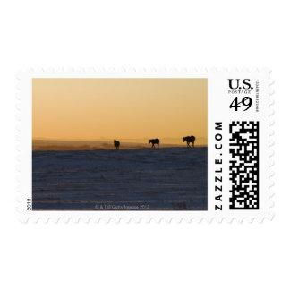 Alberta, Canada 3 Postage Stamp
