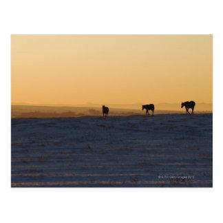 Alberta, Canada 3 Postcard
