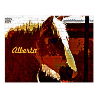 Alberta, Canadá, caballo del alazán en postal del