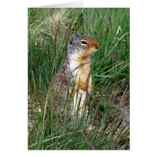 Alberta Ground Squirrel Greeting Card
