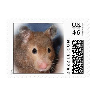 Alberta Rodent Association Hamster Stamp