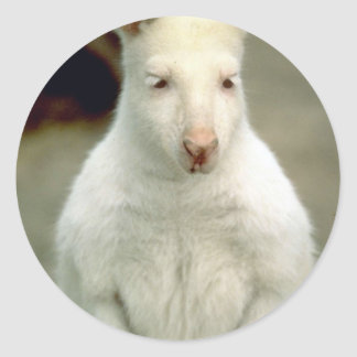 Albino Bennet s Wallaby Stickers