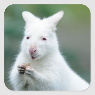 Albino Bennett Wallaby Square Sticker