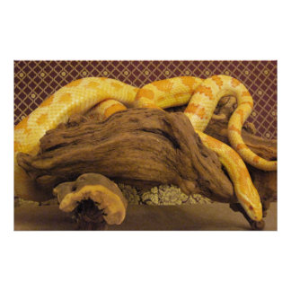 Albino Corn Snake Poster