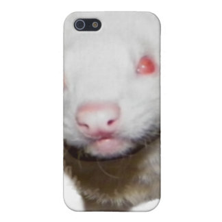 Albino Ferret Picture iPhone SE/5/5s Cover