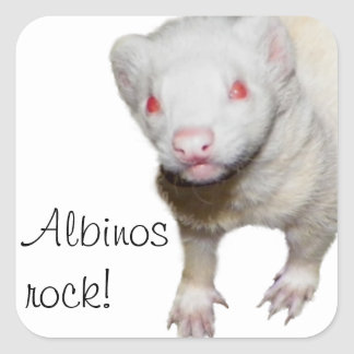 Albino Ferret Picture Square Stickers