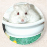 Albino Hamster Photo Drink Coaster