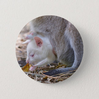 Albino joey in the pocket button