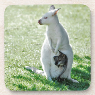 Albino kangaroo and its little coaster