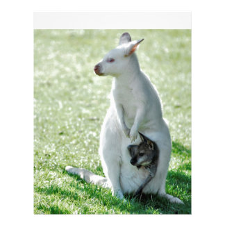 Albino kangaroo and its little letterhead