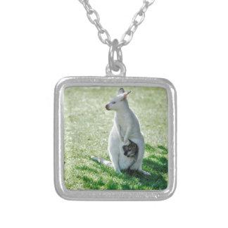 Albino kangaroo and its little necklaces