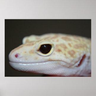 Albino Leopard Gecko Close Up  Poster