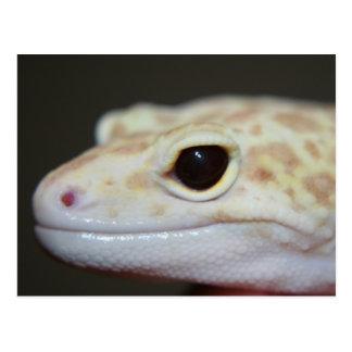 Albino Leopard Gecko Postcard