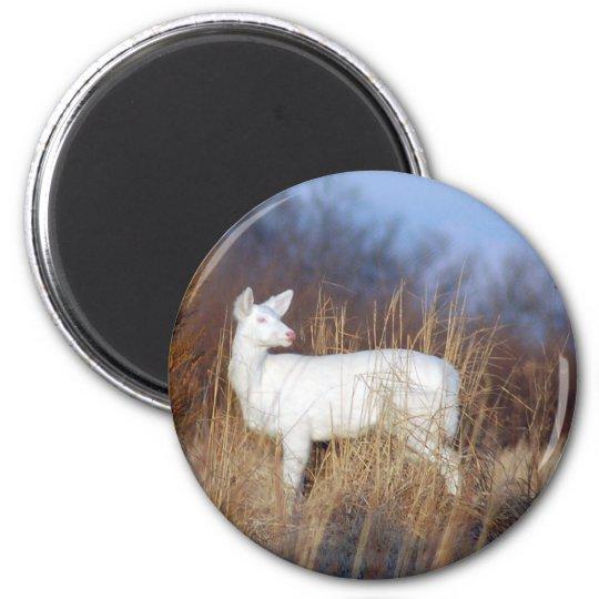 albino magnet