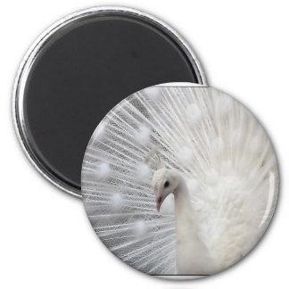 Albino Peacock 2 Inch Round Magnet