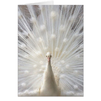 Albino Peacock Stationery Note Card