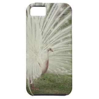 Albino peacock iPhone 5 cover