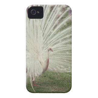 Albino peacock Case-Mate iPhone 4 case