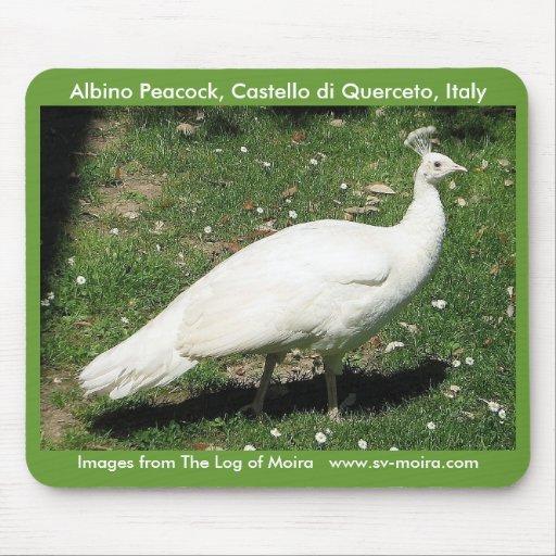 Albino Peacock, Castello di Querceto, Italy Mousepad