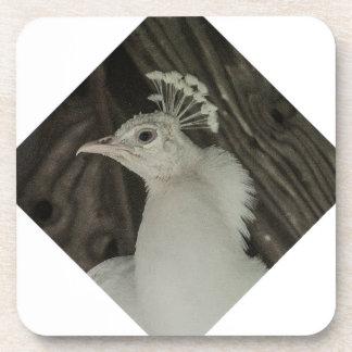 Albino peacock head coaster
