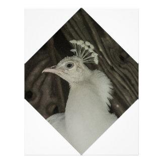 Albino peacock head letterhead
