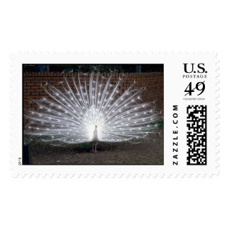 Albino Peacock Postage